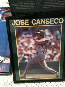 JOSE CANSECO. 8x10 framed photo Kitchener / Waterloo Kitchener Area image 1