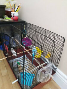 Budgie and it's cage for sale!90$