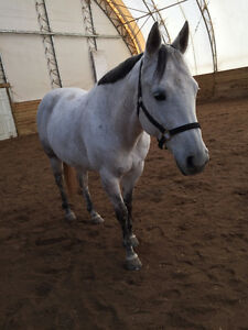 Horse for part board or potential lease