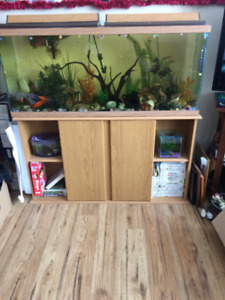 aquarium 4 foot long with everything fish stand etc