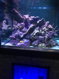 Live rock, roches vivantes pour aquarium d'eau salé +de 100 lbs
