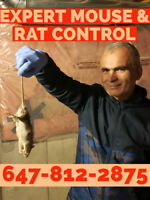 EXPERT, LICENSED MOUSE, RAT REMOVAL. PEST CONTROL 647.812.2875