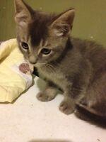 Free kitten ready to go