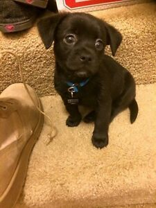 WANTED: Small puppy - male