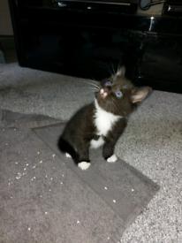 Kittens for Sale (£80 each)