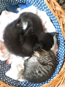 All Kittens have new homes
