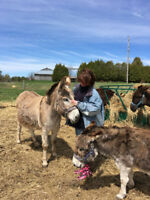 Animal Reiki Training Workshop at PrimRose Donkey Sanctuary