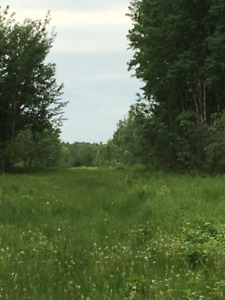 15.14 ACRES - 10 MINUTES NORTH OF ONOWAY