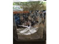 Eden 80 20 grain free dog food