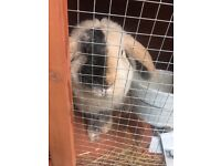 Rabbit and hutch (may sell seperatley)