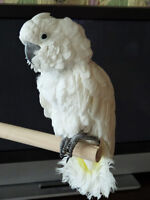 Parrot Boarding Nanaimo at your Service - Too Crazy Birdy Hotel