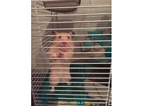 Hamster and everything you need