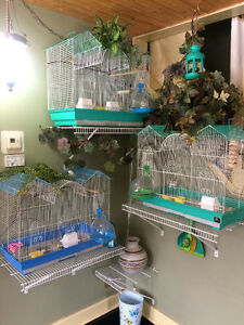 Finches- Free only to an excellent home