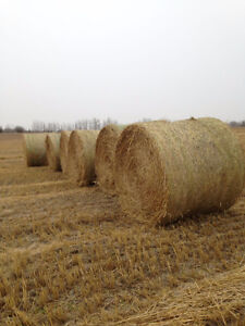 For sale on combine oats and barley straw
