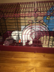 Looking for a home for my rabbit