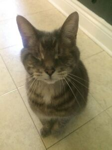 LOST BLIND CAT IN COURTICE