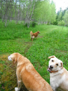 Dog Daycare & Boarding @ Piedmont Valley Farms
