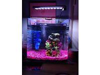 22L Aqua One Fish Tank