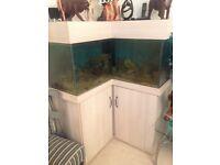 Custom built L shaped marine/tropical fish tank