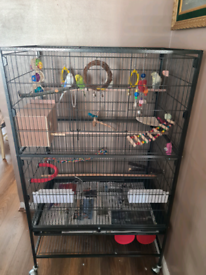 2paired budgies (4)with Xl cage