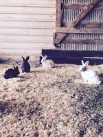 4 bunnies