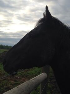 Quarter horse for sale or trade Prince George British Columbia image 3
