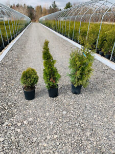 Discounted trees and planting!  Early spring sales!