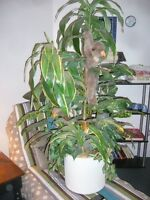 Nice Artificial Plant