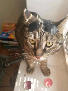Great cat looking for new home
