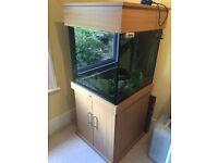 Aquarium set-up