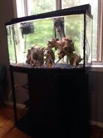 Free fish and 55 gallon aquarium and accessories