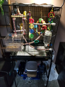 Budgies with Everything included!