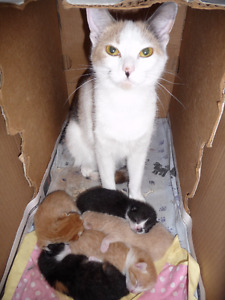 ALL ADOPTED! !Kittens! They're sooo FLUFFY! All scooped up.