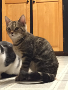 TWO FREE CATS LOOKING FOR NEW HOME