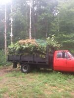 Bush cutting lot clearing brush removal/chipping insured