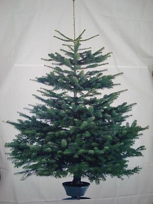 Ikea Weihnachten.ткань для рукоделия и шитья Home Kontor Tannenbaum Stoff Baum Vinter Ikea Weihnachten Deko Ca 220x150 Neu