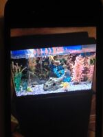 30 Gallon fish tank with stand and fish