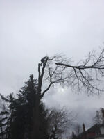 Southern Ontario Tree Specialists (289)700-9364