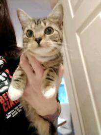 11 month old female kitten