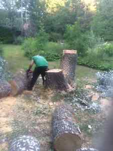 Tree Removal >Tree Triming >PruninG,FALL SPECIAL...... Kitchener / Waterloo Kitchener Area image 6