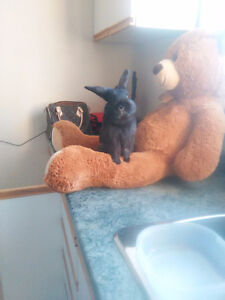 Bunny looking for a forever home