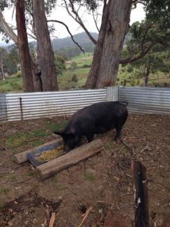 Pig Port Huon Huon Valley Preview