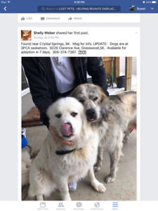 2 Pyrenees Found