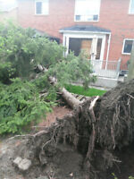 Tree Removal (Stump Grinding)!