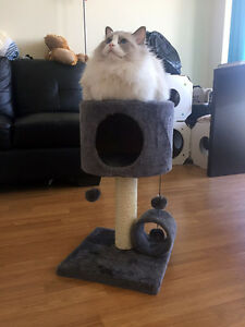 beautiful cat tree for sale