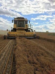 Flax Straw Bales for Sale- Cheap, Cheap,Cheap!