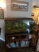 Cichlid special ** 90 Gal aquarium