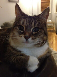 Lost cat on Darlington Drive, Sunset Ridge, Middle Sackville