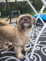 Looking for a great home for my dads dog!