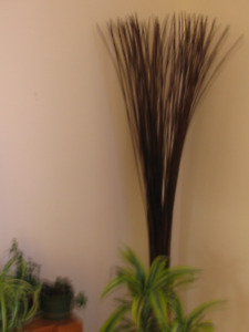 Tall, brown,  grassy, bamboo-type of thing.